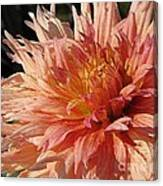 Dahlia Named Intrepid Canvas Print