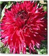 Dahlia Named Mingus Erik Canvas Print