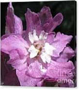 Delphinium Named Magic Fountains Lilac Pink Canvas Print