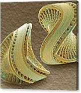 Diatoms, Sem Canvas Print