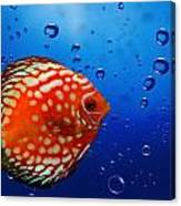 Discus Fish Canvas Print