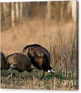 Eastern Wild Turkeys Canvas Print