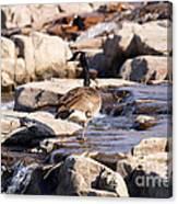 Falls Park Waterfalls Canvas Print