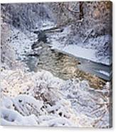 Forest Creek After Winter Storm Canvas Print