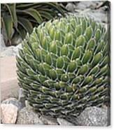 Garden Cactus Canvas Print