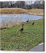 3 Geese Canvas Print