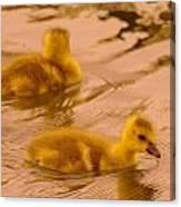 Goslings Canvas Print