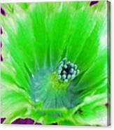 Green Cactus Flower Canvas Print