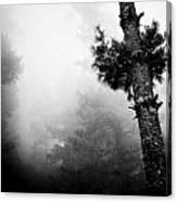 Himalyas Mist Canvas Print