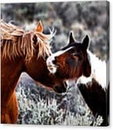 Horse Play Canvas Print