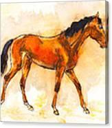 Horse Portrait Canvas Print