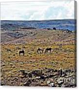3 Horses At 4 Corners Canvas Print