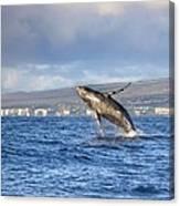 Humpback Whale Canvas Print