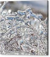 Ice Storm Alfalfa Canvas Print