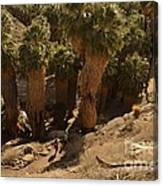 Indian Canyon Canvas Print
