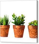3 Indoor Plants Canvas Print