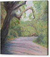 Kingsley Plantation Road Canvas Print