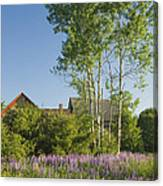 Maine Wild Lupine Flowers Canvas Print