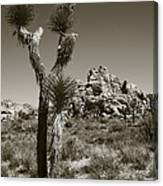 Joshua Tree National Park Landscape No 3 In Sepia Canvas Print