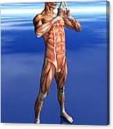 Misc. Anatomy Images Canvas Print