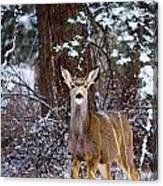 Mule Deer In Snow Canvas Print