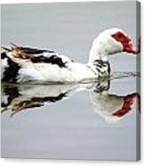 Muscovy Water Reflection Canvas Print