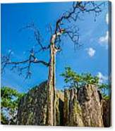 Old And Ancient Dry Tree On Top Of Mountain Canvas Print