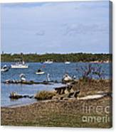 Opening Day For Snook Fishing At Sebastian Inlet In Florida Canvas Print