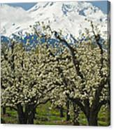 Orchard And Mount Hood, Oregon Canvas Print