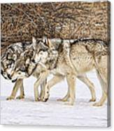 3 Pack Canvas Print