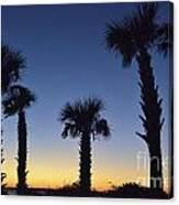 Carolina Palm Sky Canvas Print
