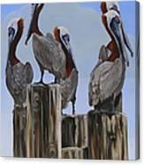 Pelicans Five Canvas Print