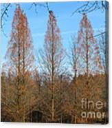 3 Pines Canvas Print