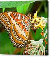 Plain Tiger Butterfly Canvas Print