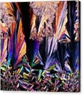 Plm Of Crystals Of Testosterone Canvas Print
