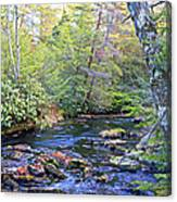 Pocono Mountain Stream Pennsylvania Canvas Print