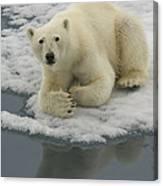 Polar Bear Resting On Ice Canvas Print