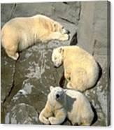 3 Polars Canvas Print