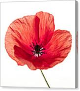 Red Poppy Flower Canvas Print