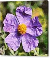 Rockrose Flower Canvas Print