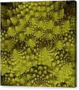 Romanesco - Italian Broccoli Canvas Print