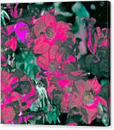 Rose 72 Canvas Print
