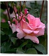 Rose Of Summer Canvas Print