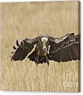 Ruppells Vulture Canvas Print