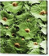 Russian Silverberry Leaf Sem Canvas Print