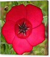 Scarlet Flax Canvas Print