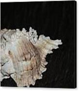 Sea Shell Canvas Print