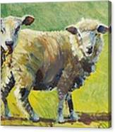 Sheep Painting Canvas Print