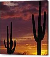 Silhouetted Saguaro Cactus Sunset At Dusk Arizona State Usa Canvas Print