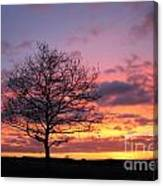 Spectacular Sunset Epsom Downs Surrey Uk Canvas Print